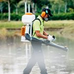 termite pest control singapore