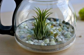 All about terrarium and workshop