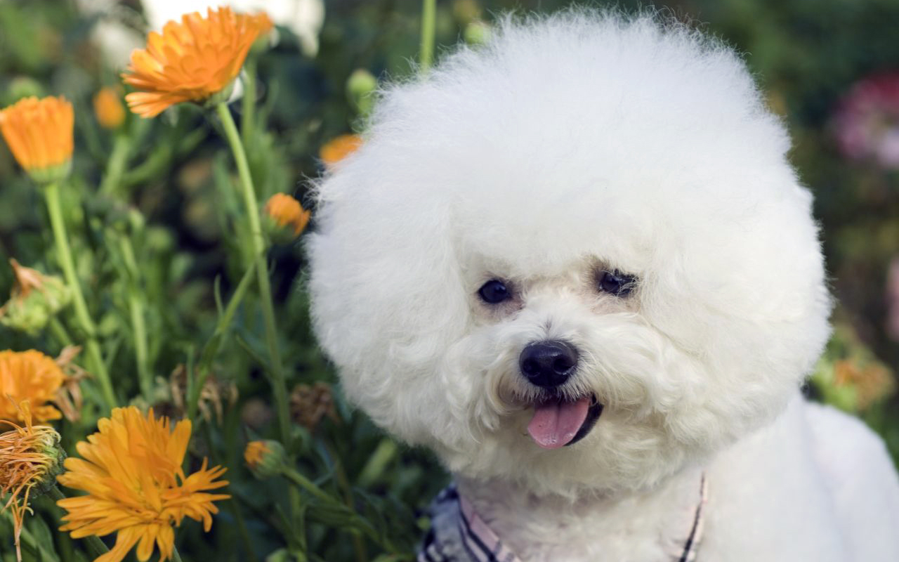 Professionals Apply Eco-friendly Products for Mobile Pet Grooming