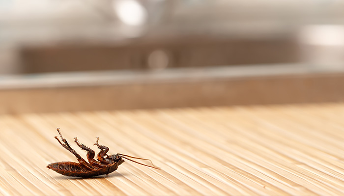 Cockroach Pest Control – Get Rid Of Them the Right Way