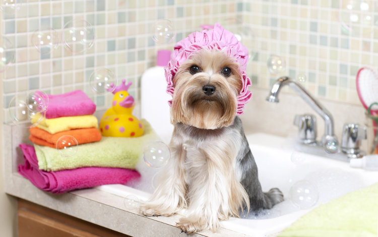 Dog Grooming-A Way to Pamper Your Puppy